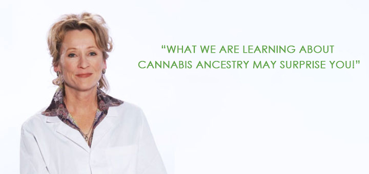 What we are learning about cannabis ancestry may surprise you!