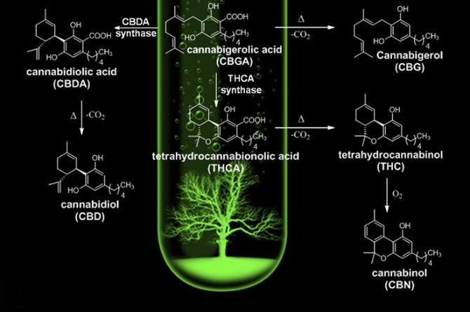Different Types of Commonly Found Cannabinoids