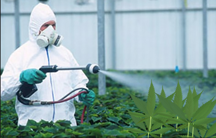7 Days Away From Legal Marijuana, Oregon Finalizes Rules For Testing / Pesticide Control