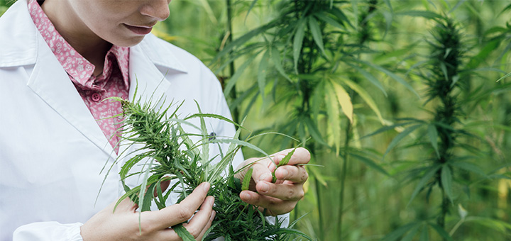 Scientists Tell Time Magazine Their Marijuana Research Goals