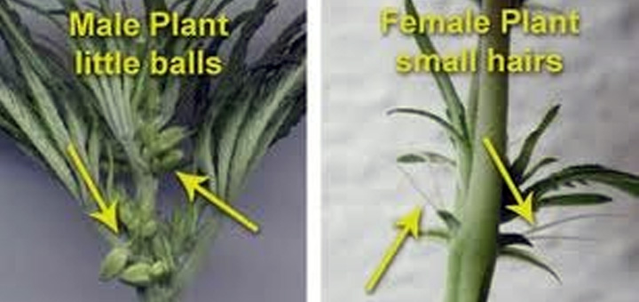 The Utility of Plant Sexing