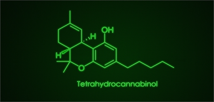 Breaking Down The Endocannabinoid System