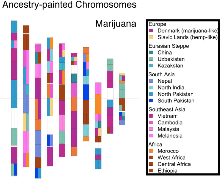 How The Marijuana Genome Map Can Make Cannabis Better