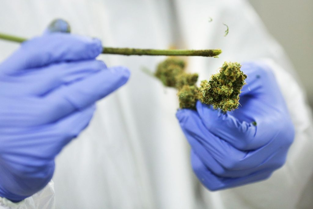 The Bill to Legalize Medical Cannabis Research