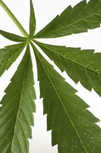 nevada cannabis testing company digipath launches grosciences